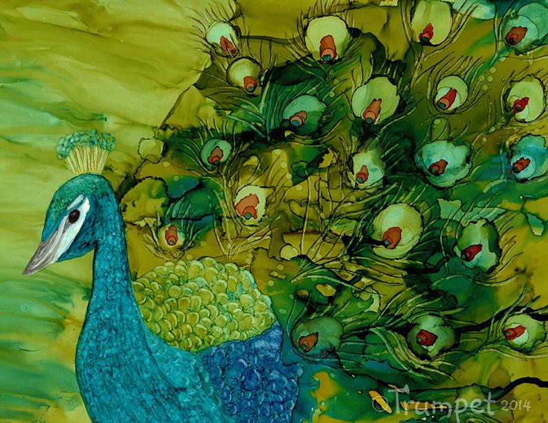 Joey, Peacock Art Print