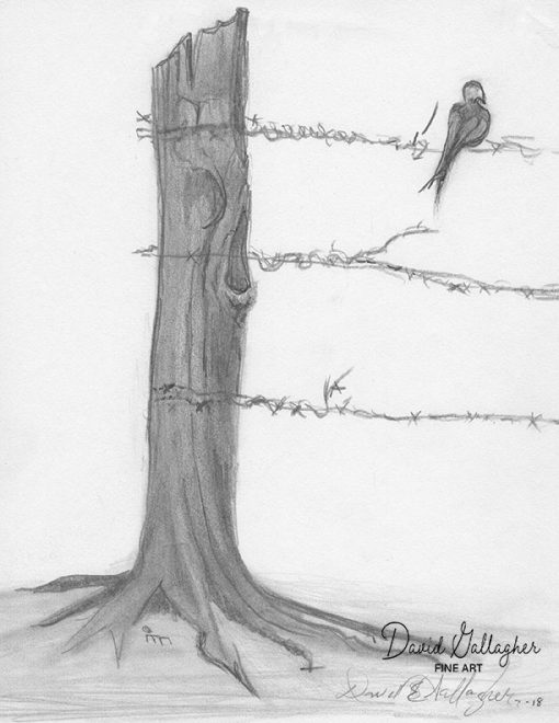 Bird on a Barb Fine Art Prints